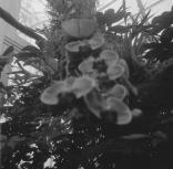 Miss Duke's Orchids