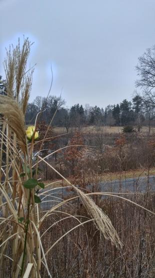 Memory entwined in habitat